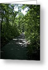 1174, Forest Path Greeting Card