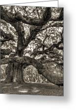 Angel Oak Live Oak Tree Greeting Card