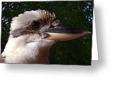 Australia - Kookaburra Poses Greeting Card