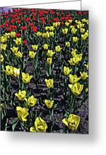 Flower Carpet. Greeting Card