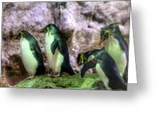 Hellabrunn Zoo - Munich, Germany Greeting Card