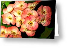 Nature Series Greeting Card