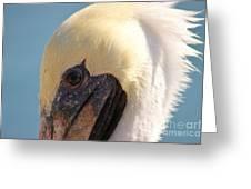 Pelican Up Close Greeting Card