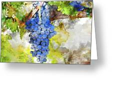 Red Grapes On The Vine Greeting Card