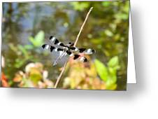 12 Spotted Skimmer Dragonfly 2 Greeting Card