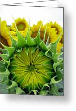 Sunflower Series Greeting Card