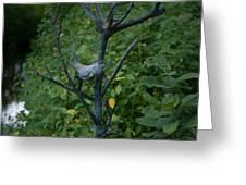 Wellfield Gardens Greeting Card