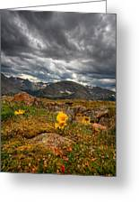 12000 Foot Flower Greeting Card by Peter Tellone