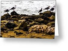 Ca Bird Greeting Card