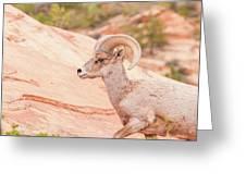 Desert Bighorn Ram Greeting Card