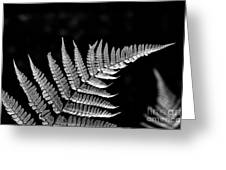 Fern Close-up  Greeting Card