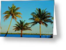 13- Palms In Paradise Greeting Card