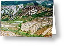 Longji Terraced Fields Scenery Greeting Card