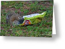 14- Chip Lovin' Squirrel Greeting Card