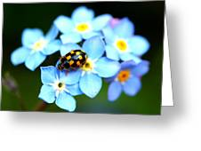 14 Spot Ladybird Greeting Card