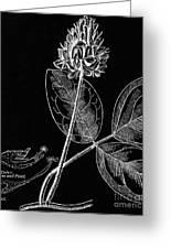 Vintage Botanical Illustration Greeting Card
