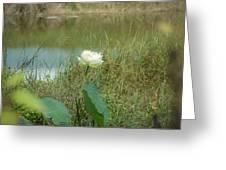 White Lotus Flower Flower Lotus Nature Summer Green Plant Blossom Asian Greeting Card