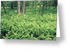 146113 Frens In Pisgah Nat Forest H Greeting Card