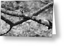 Bare Tree Branches In Early Spring Greeting Card