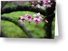 Blossoming Peach Flowers  Closeup Greeting Card