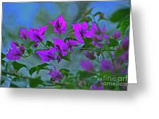 15- Bougainvillea Greeting Card