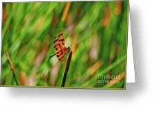 15- Dragonfly Greeting Card