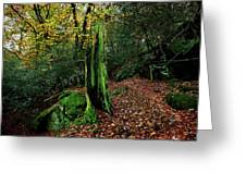 Fontainebleau Forest Greeting Card