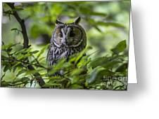 150501p136 Greeting Card