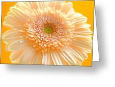 1527-004 Greeting Card