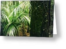 Jungle 72 Greeting Card