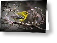 1574 - Pine Warbler Greeting Card