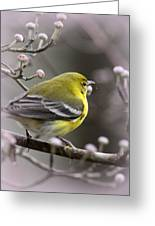 1575 - Pine Warbler Greeting Card