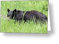 American Black Bear Yellowstone Usa Greeting Card