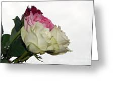 Beautiful Roses Greeting Card
