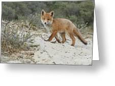 Red Fox Cub Greeting Card