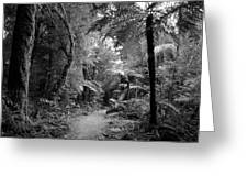Jungle 45 Greeting Card
