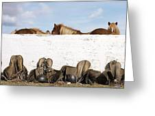 162669 Horse Walls Animals National Geographic Greeting Card