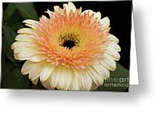 Beautiful Gerber Greeting Card