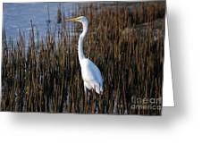 17- Great Egret Greeting Card