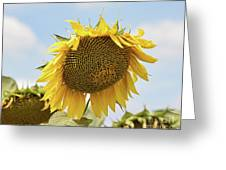 Nice Sunflower Greeting Card