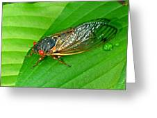 17 Year Periodical Cicada Greeting Card