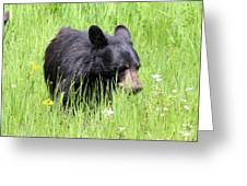 American Black Bear Yellowstone Usa Greeting Card