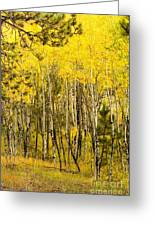 Rocky Mountain Autumn Greeting Card