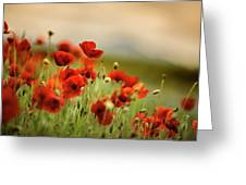 Summer Poppy Meadow Greeting Card