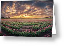 180 Degree View Of Sunrise Over Tulip Field Greeting Card