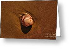Beach Shell Greeting Card