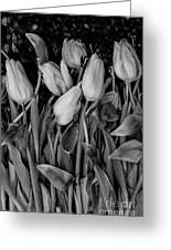 Tulips Wilting Greeting Card