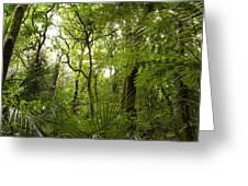 Jungle 1 Greeting Card