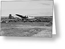 1944 B-24 H Plane In Field W/ Sheeep Pantanella Airfield Italy Greeting Card
