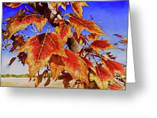 #199 Red Maple Greeting Card